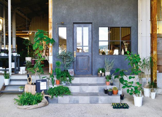 """『Plants&Flower Kaorin』植物のある暮らしをもっと身近に感じられる 新たなる""""Kaorinワールド""""へご案内!"""